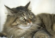gatto dagli occhi splendidi