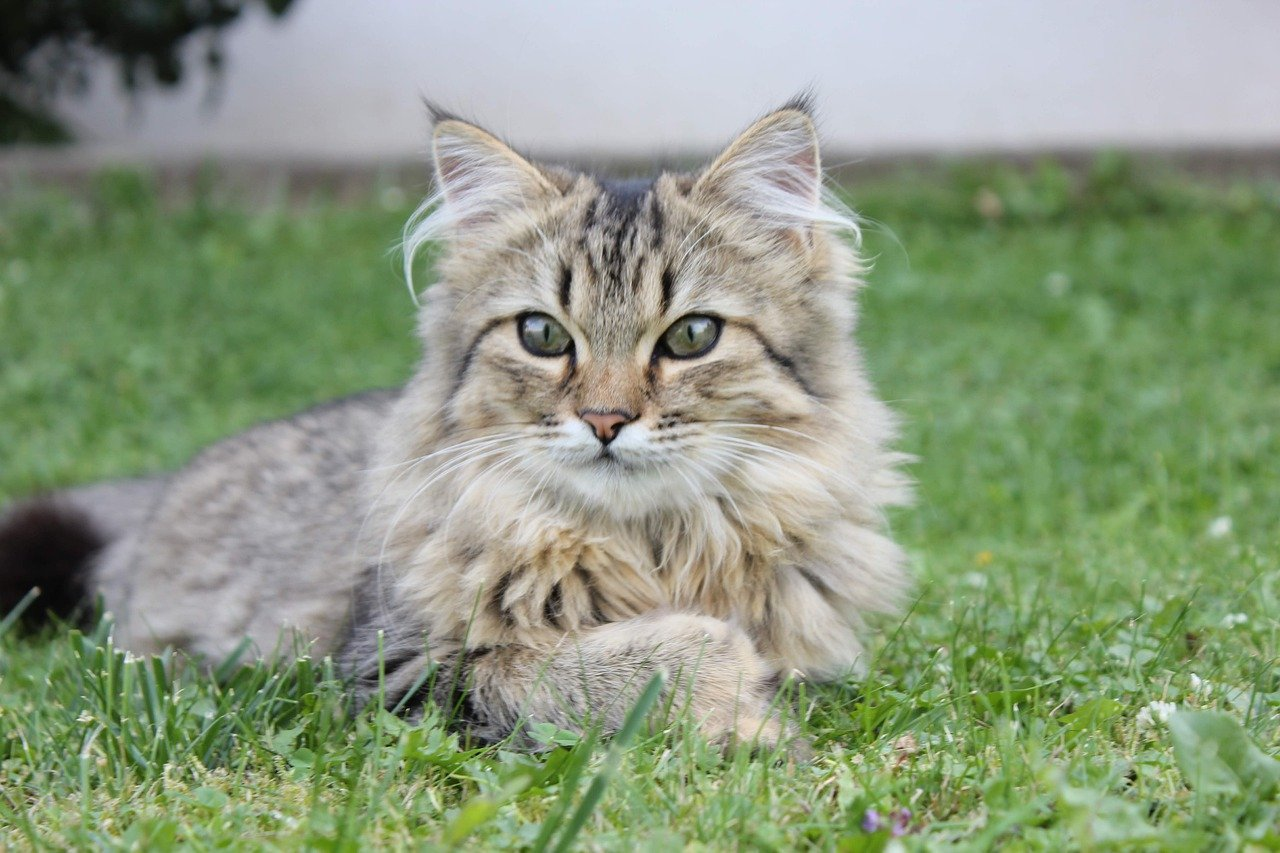 gatto rilassato nell'erba