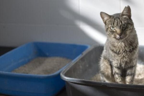 due lettiere per un solo gatto