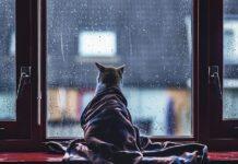 gatto che guarda la pioggia dalla finestra