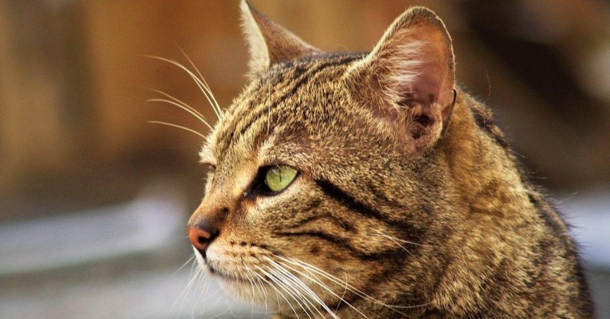 gatto colori bellissimi
