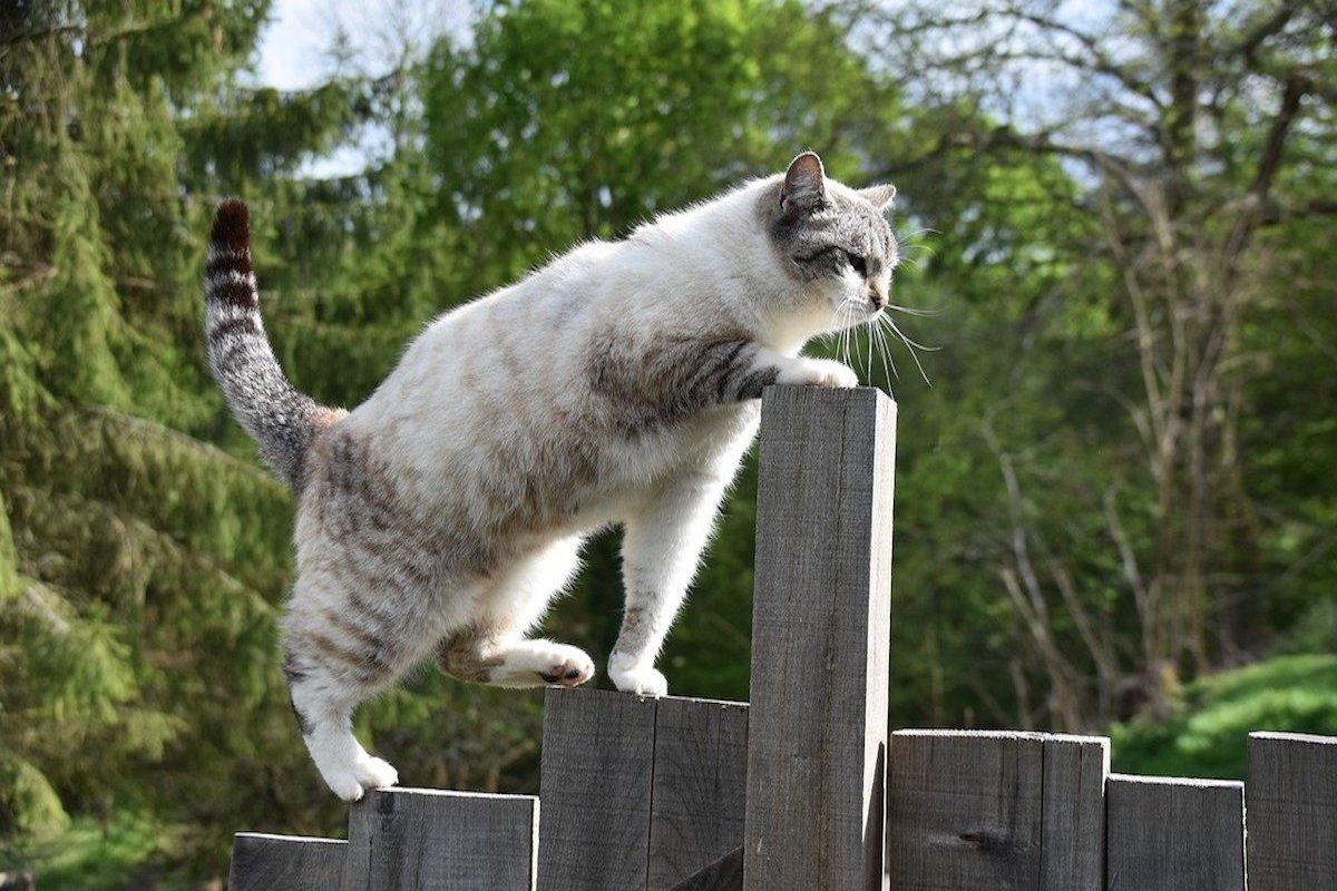gatto si arrampica