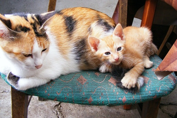 gatti su una sedia