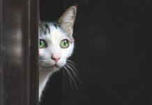 gatto dietro la porta