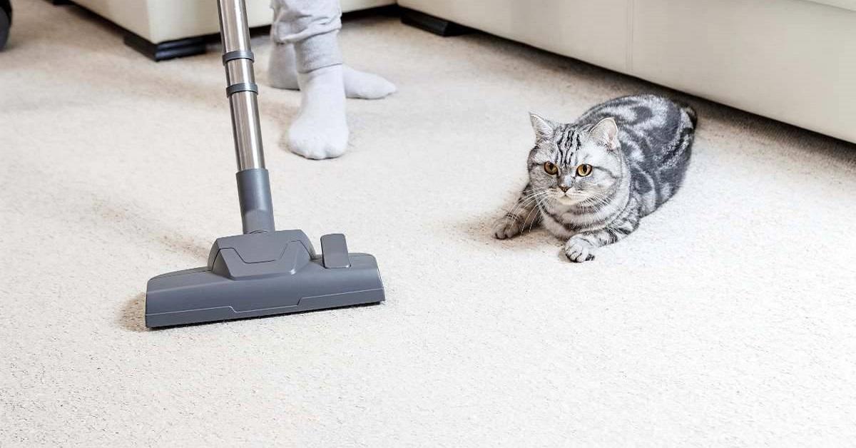 rumore dell'aspirapolvere fa paura al gatto
