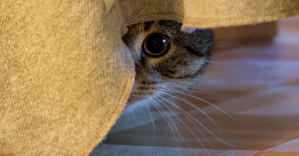 gatto nascosto per timore