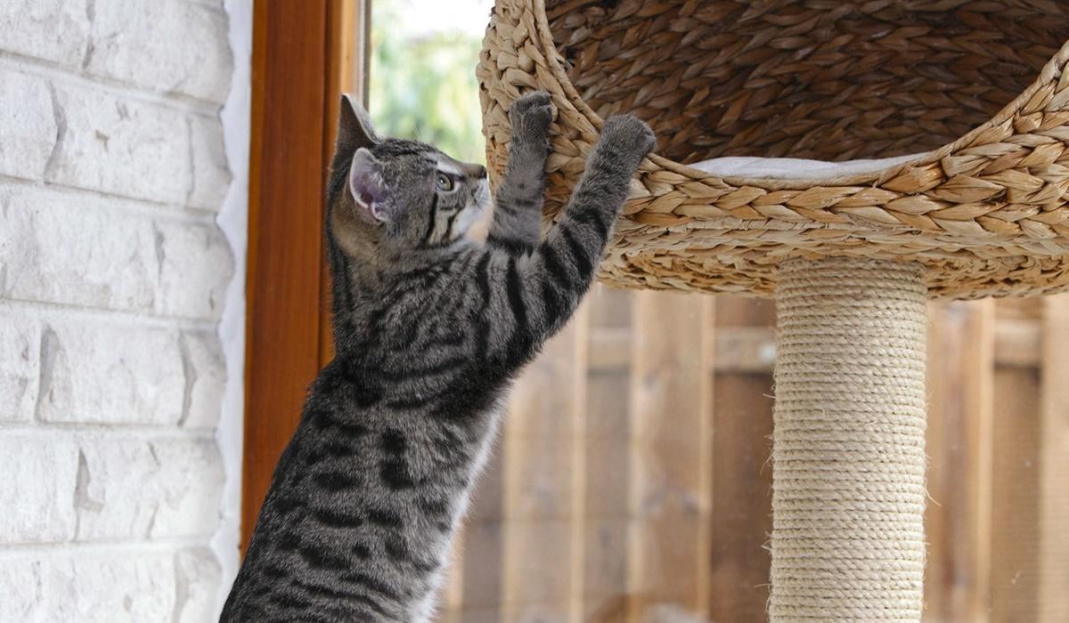 albero tiragraffi per il gatto