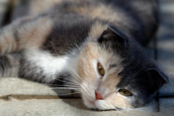 gatto che dorme al sole