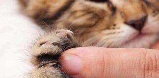 dito e zampa del gatto a contatto