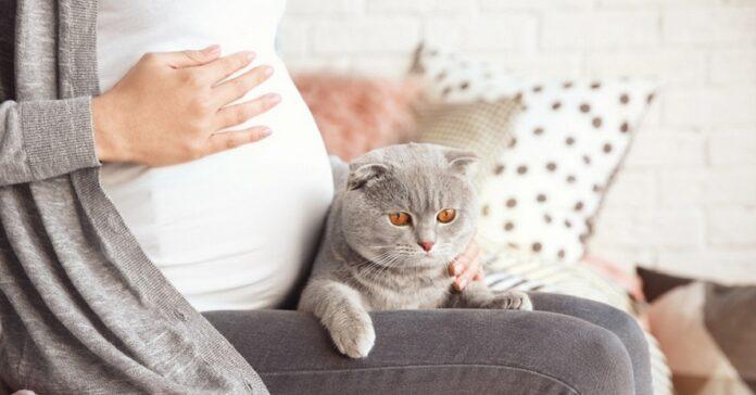 gatto vicino a ragazza incinta