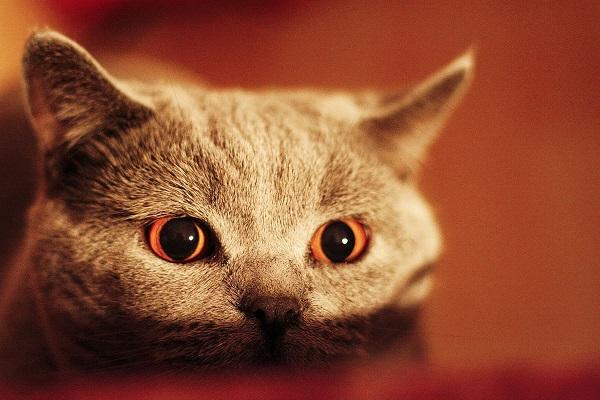 gatto che analizza