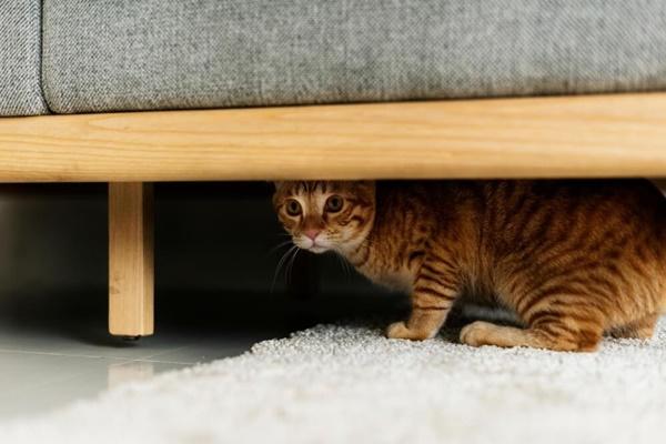 gatto si nasconde perché ha paura