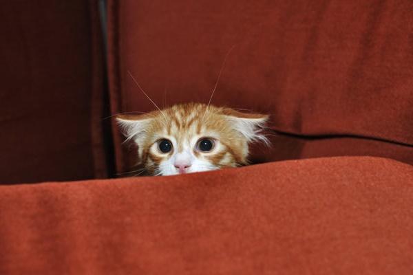 gattino arancione e tigrato spaventato
