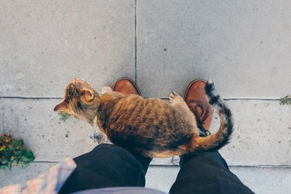 gatto fa le fusa al padroncino