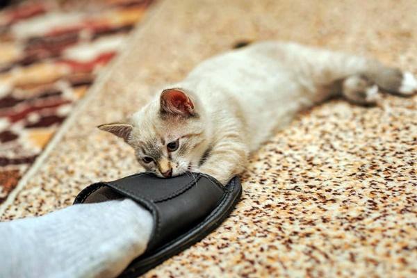 gattino morde i piedi