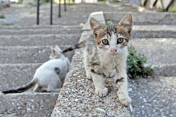 gattini randagi che vivono in strada