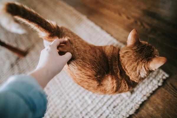 gatto che fa le fusa