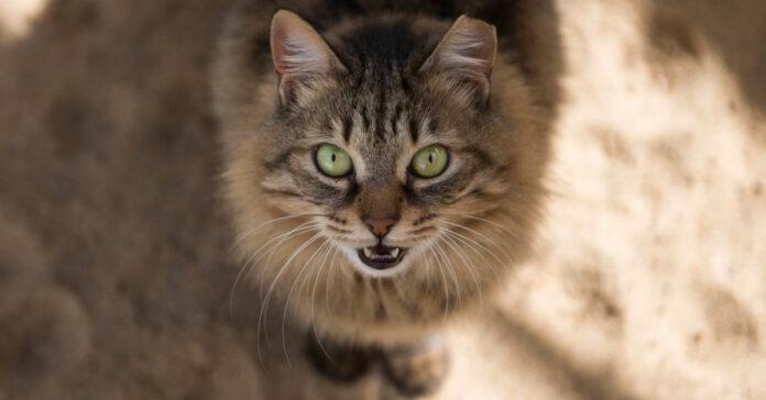 giovane che odia gatti