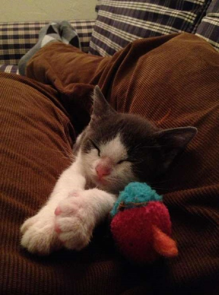 crescita gattino amico