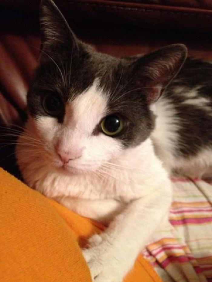 salvataggio gatto adozione