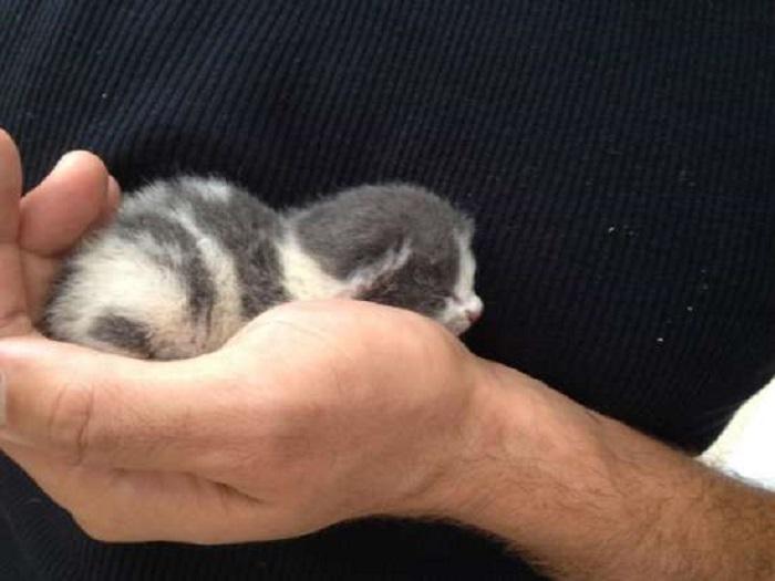 recupero gattino ragazzo