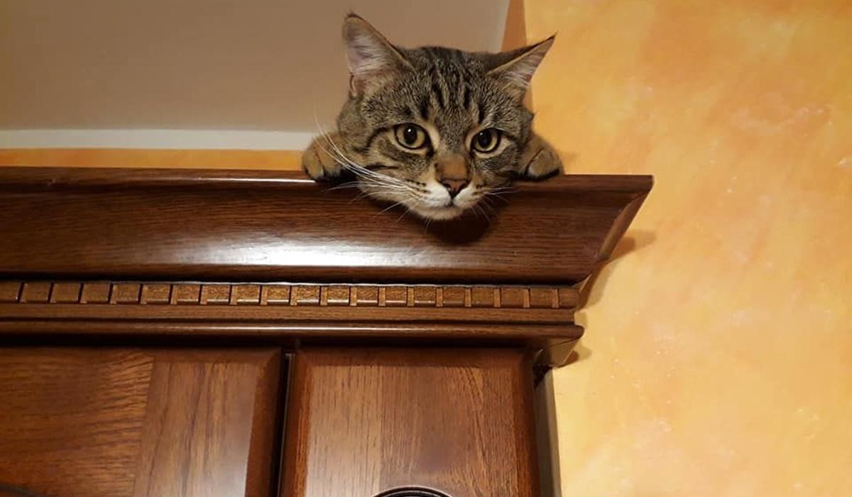 gatto sull'armadio