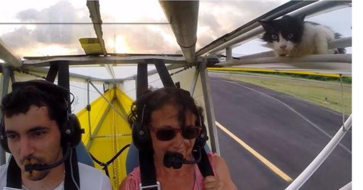 pilota e passeggera in deltaplano si accorgono che c'è un gatto sull'ala