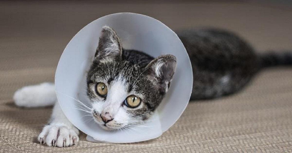 gattino con collare elisabettiano