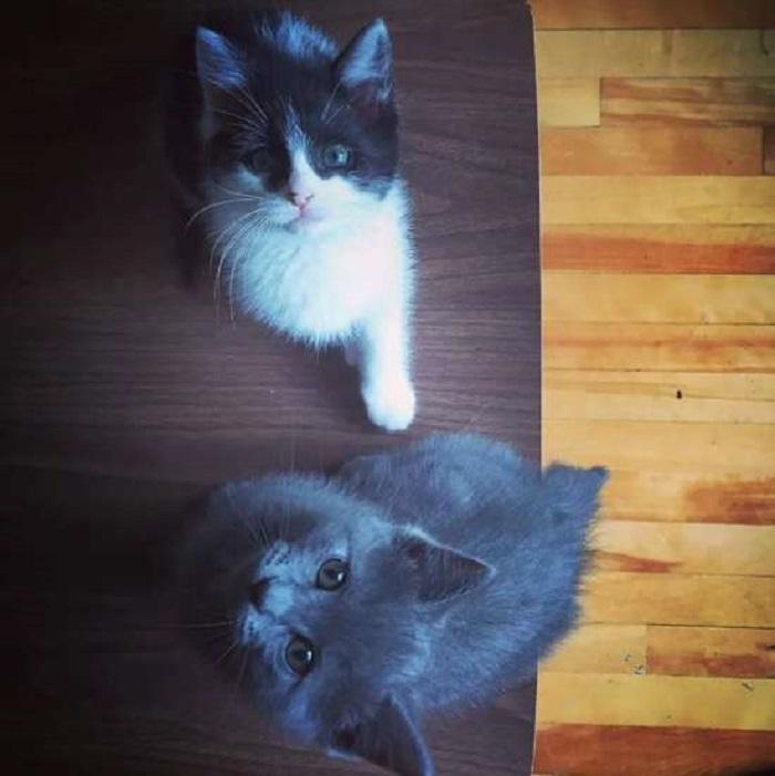 gattini teneri foto