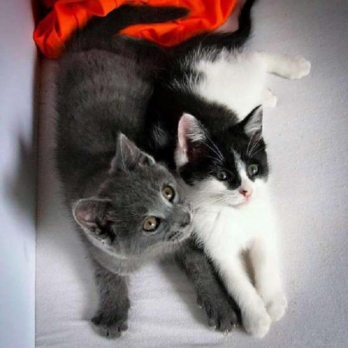 uniti gatti salvataggio