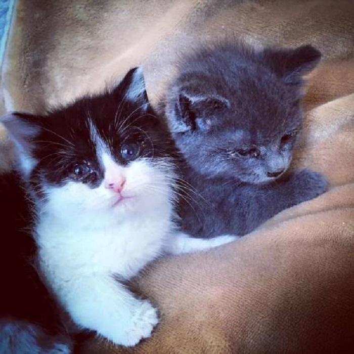 gattini unione forza