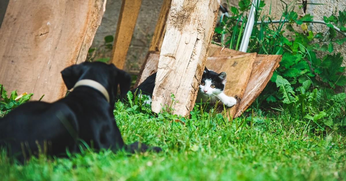 gattino e cane