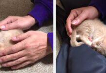 hinoki gattino testardo vuole dormire fra le braccia di papà