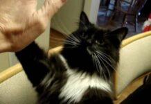 hoote gatto che impara alcuni trucchi dalla mamma