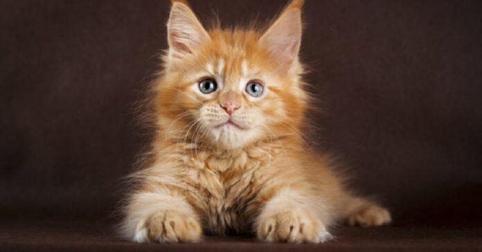 gattino intrappolato nella fogna