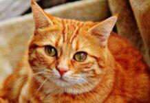 alvi gattino foto