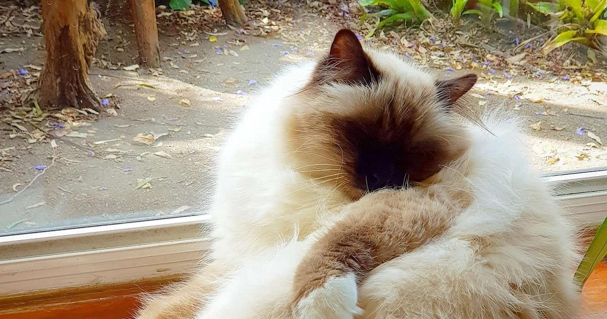 gattino amicizia foto