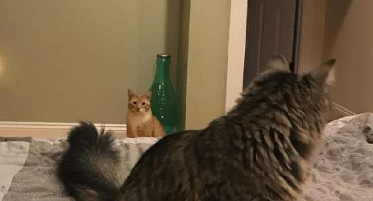 gatto fissa donna