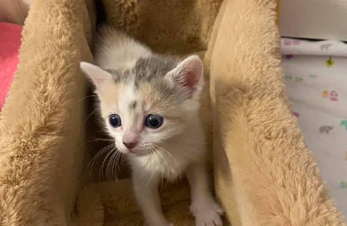 salvataggio piccoli gattini