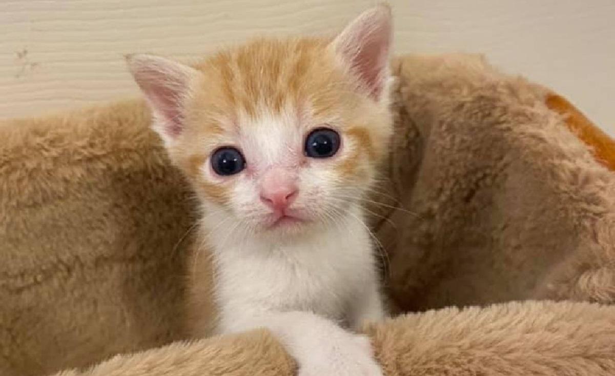 gattino salvato foto