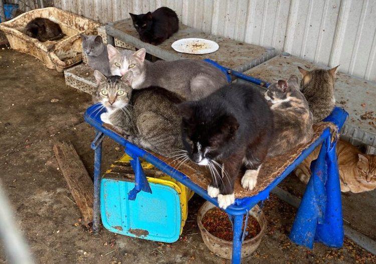 gattini sporco condizione