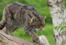 shauna gattina extremis