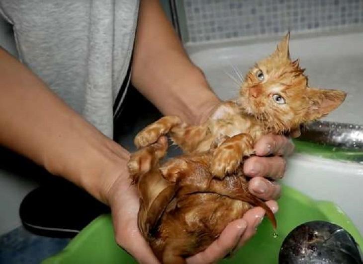 dessy gatto sera indimenticabile