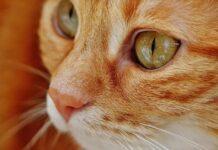 gattino anziano jamie