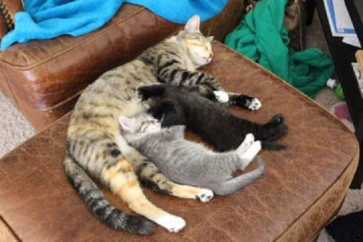 jupiter mamma gatta attenzione piccoli