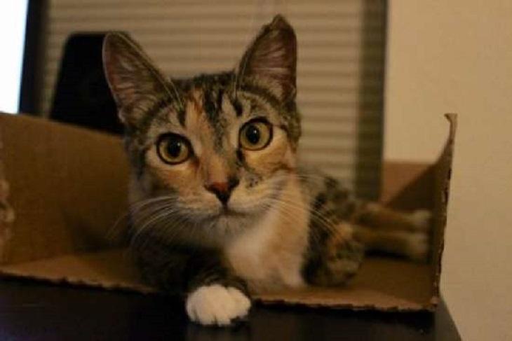 jupiter gatta visita veterinario