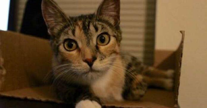 jupiter gatta decise casa nella quale partorire i piccoli