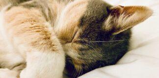 Perché i gatti nascondono la testa