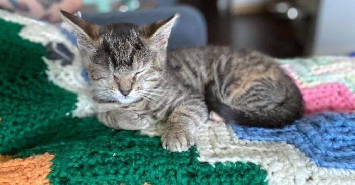 gattina betsy aspetto