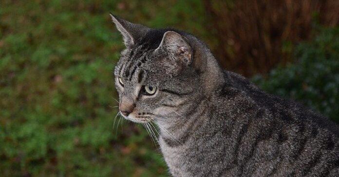 lottie gattina paure
